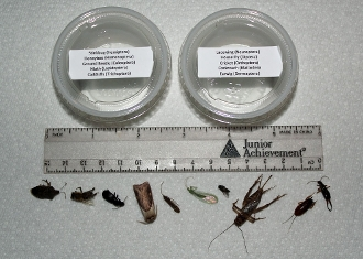 buy dead bug collection