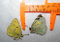 Orange Sulphur Butterfly Dried Colias eurytheme Buy Dead